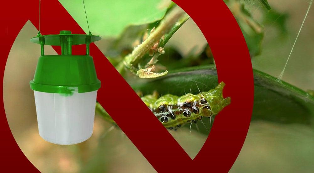 Zünsler bekämpfen – Pflanzen retten.