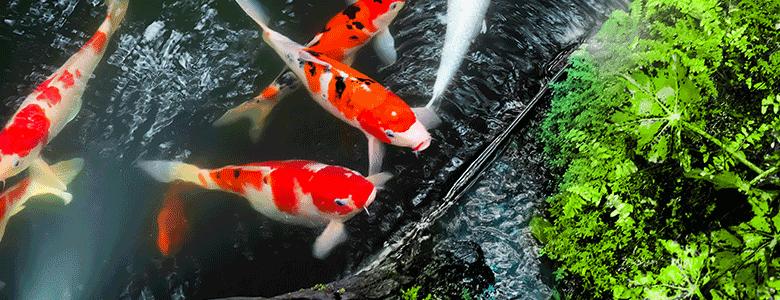 Alles für Ihren Teich
