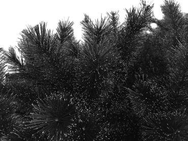 HXT 18018 schwarz Weihnachtsbaum – Bild 3