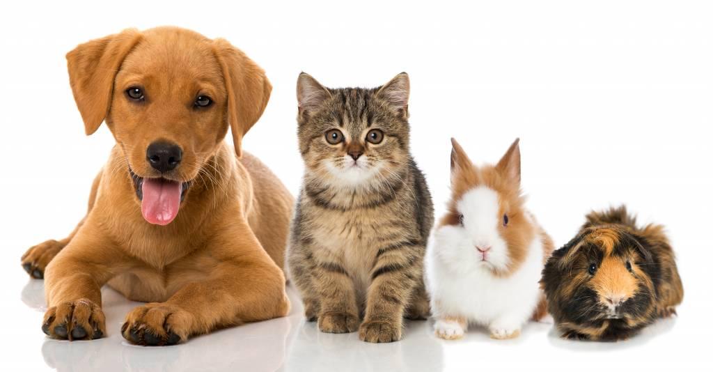 Haustier