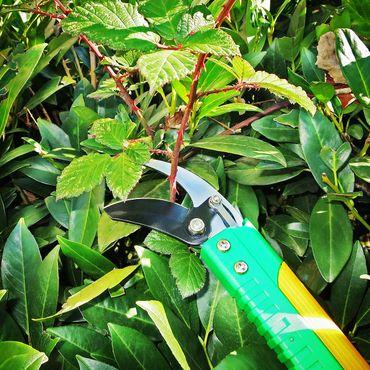 GRÜNTEK verlängerte Gartenschere LAMA 410 mm mit Klinge 55 mm aus japanischem SK5 Stahl, Bypass, antihaftbeschichtet, mit bequemen Griffen, Grün – Bild 3