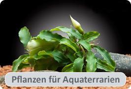 Terrariumpflanzen