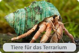 Tiere für das Terrarium
