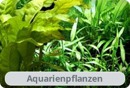 Aquariumpflanzen