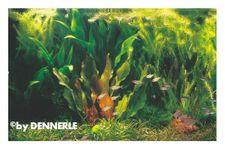 Rio Xingu, 100 x 40 x 50 cm, Pflanzensortiment