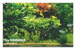 Holland-Aquarium, Pflanzensortiment für 100 x 40 x 50 cm 001