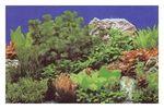 Hobby Fotorückwandzuschnitt Pflanzen 8/Marin Blue, 50 x 100 cm 001