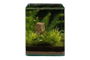 Pflanzensortiment Blyxa Cube für 10 l Nano-Aquarium