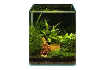 Pflanzensortiment Microsorum Cube für 20 l Nano-Aquarium