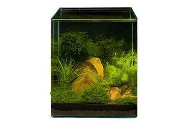 Pflanzensortiment Bamboo Cube für 30 l Nano-Aquarium