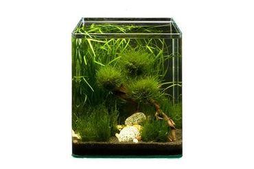 Pflanzensortiment Biosphere Cube für 30 l Nano-Aquarium