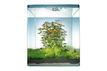 Pflanzensortiment Sunrise Island  30 l Nano-Aquarium