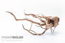Stoffels Spiderwood mittel, ca. 25-40 cm