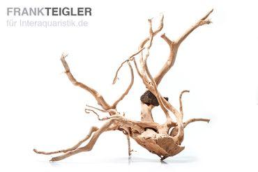 Stoffels Spiderwood groß, ca. 40-50 cm