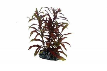 Hobby Nesaea, 13 cm