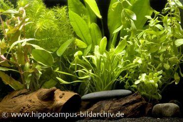Aquarienpflanzen Einsteigerset für 60 cm Aquarium