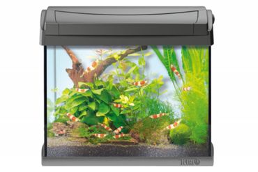 Tetra AquaArt LED Aquarium 20 L Shrimps