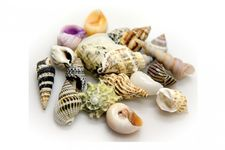 Hobby Sea Shells Set S