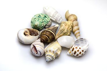 Hobby Sea Shells Set M