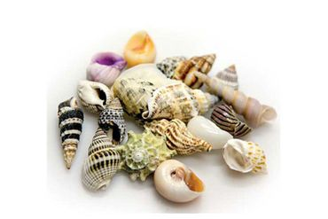 Hobby Sea Shells Set L