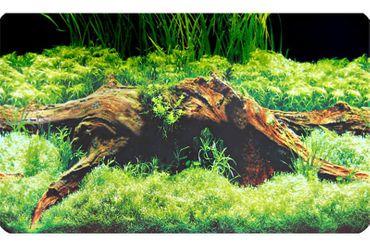 Hobby Fotorückwandzuschnitt Spring/Moss, 100 cm x 50 cm – Bild 1