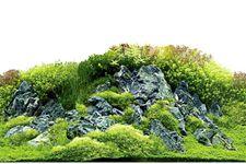 Hobby Fotorückwandzuschnitt Scapers Hill/Scapers Forest, 60 cm x 30 cm