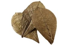 Hobby Nano Catappa Leaves, Seemandelbaumblätter, 12 St. – Bild 2