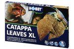 Hobby Catappa Leaves XL, Seemandelbaumblätter, 12 St. 001