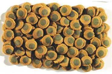 Tetra Pleco Algae Wafers, 250 ml – Bild 2