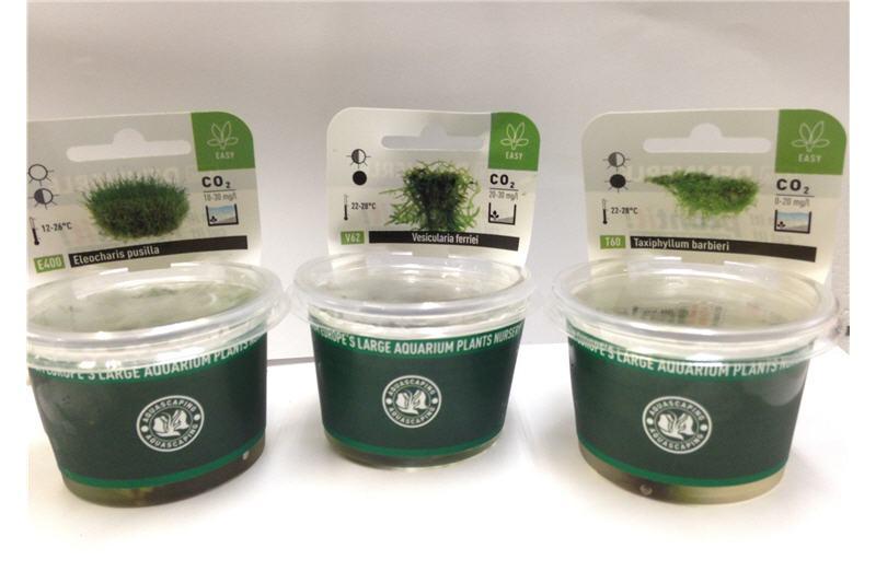 Bodendecker Moos Sortiment In Vitro 6 Portionen Aquariumpflanzen