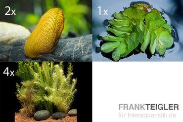 Schwebealgen-Bundle: 2x Ornamentmuscheln + 1 Portion Büschelfarn + 4 Bund-Pflanzen – Bild 1