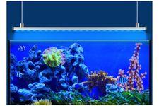 EHEIM powerLED+ marine actinic, 36 cm, 8,6 W, LED Stripe inkl. Reflektor – Bild 4