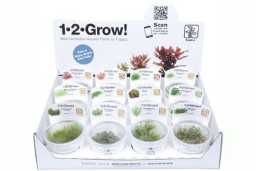 1-2-Grow Box, In-Vitro-Sortiment, 12 Portionen