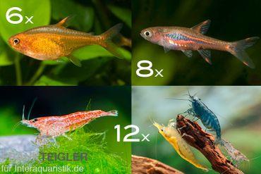 Bundle: Minifische+Garnelen für Becken ab 60 cm