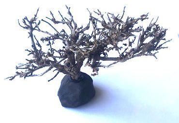 Aquahobby Mini-Bäumchen, 20-25 cm – Bild 2