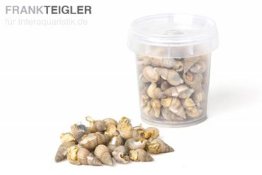 Hausmarke Sea-Snails, getr. Seewasserschnecken, 250 ml