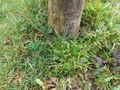 Tarnbehälter mit Grasoptik / Fake Gras Bild 4