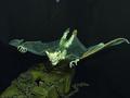 Geocache Halloween Gnom mit Fledermausflügeln UV-aktiv 120cm Bild 2