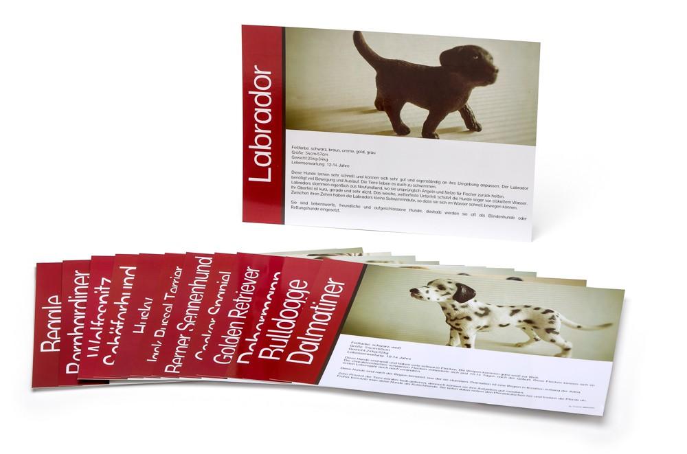 Lernkartei - Hunde