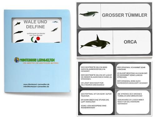Einführende Lernkartei - Wale und Delfine
