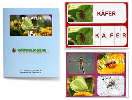 Lernkartei - Insekten