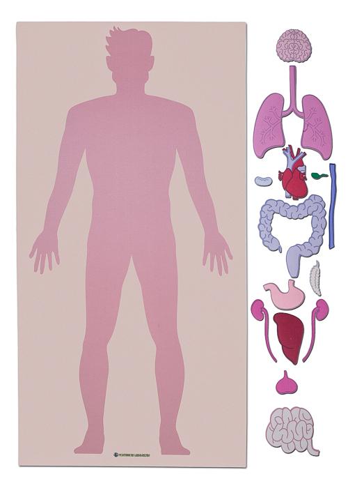Lebensgroßer Lernteppich des menschlichen Körpers und seiner Organe