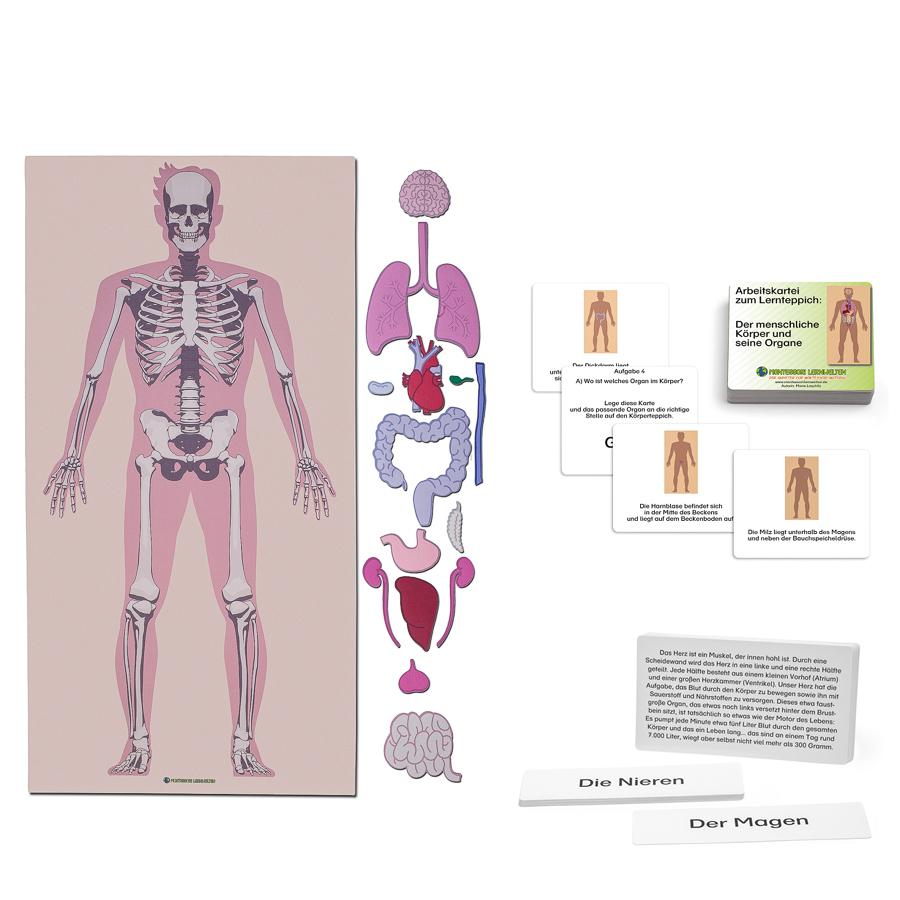 Der menschliche Körper – Set 1