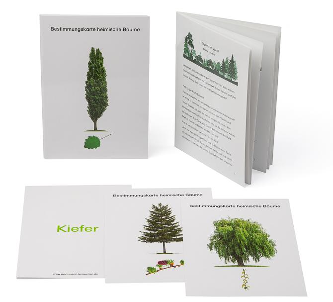 """Ergänzungsmaterial """"Heimische Bäume"""