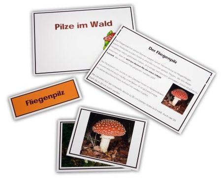 Pilze des Waldes - Legematerial