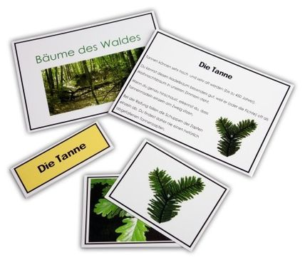 Bäume des Waldes - Legematerial