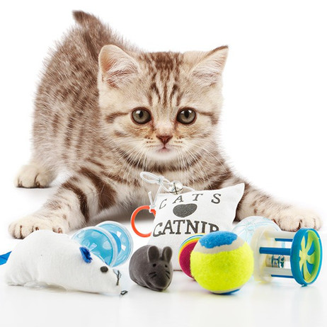 SPIELZEUG für KATZEN Katzenspielzeug – Bild 3