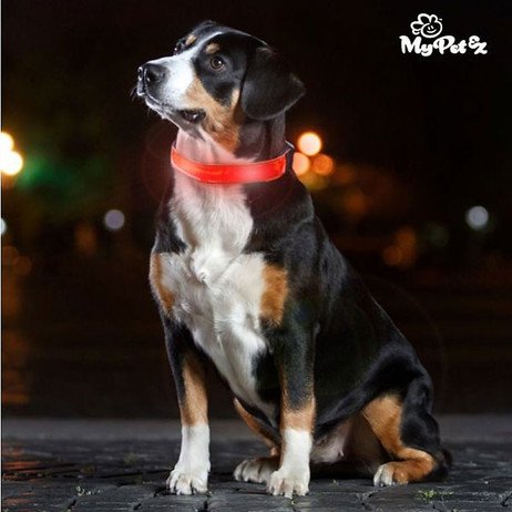 MY PET EZ LED-Hundehalsband  – Bild 3