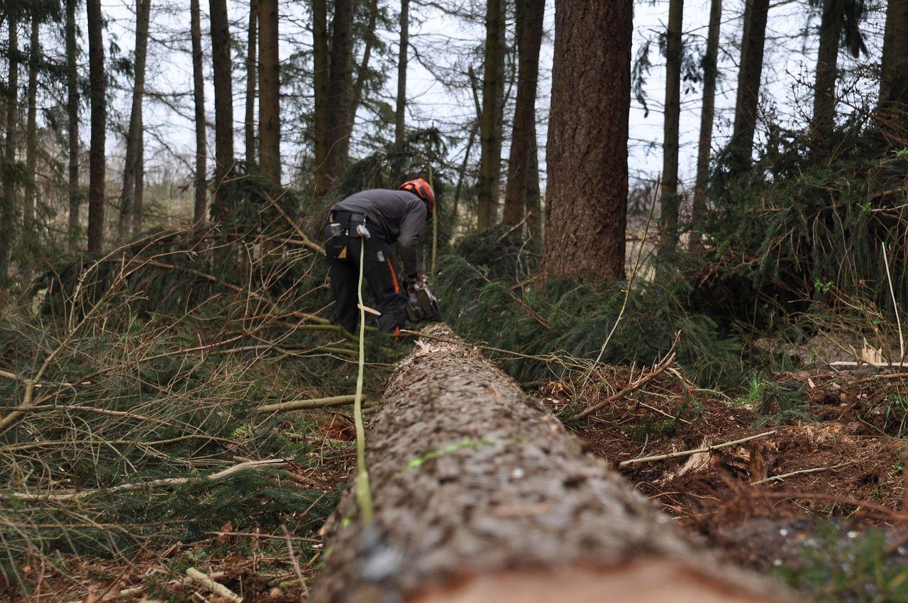 Für den Forst