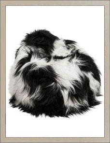 BEAN BAG | Sheepskin black and white